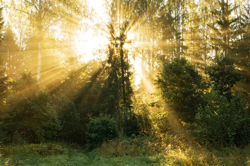 Päikesesäras