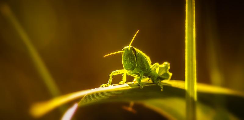Bugs and Beetles - 125.jpg