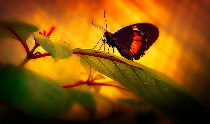 Butterfly-124.jpg