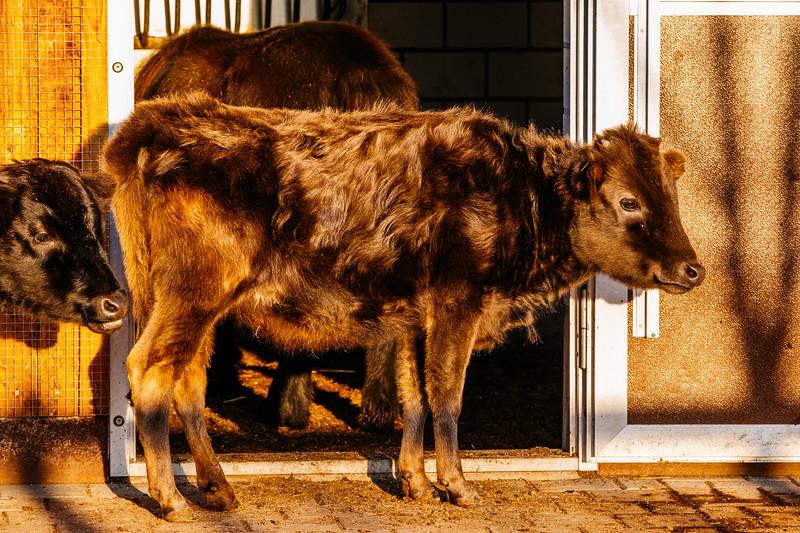 Tonis Zoo-0207.jpg