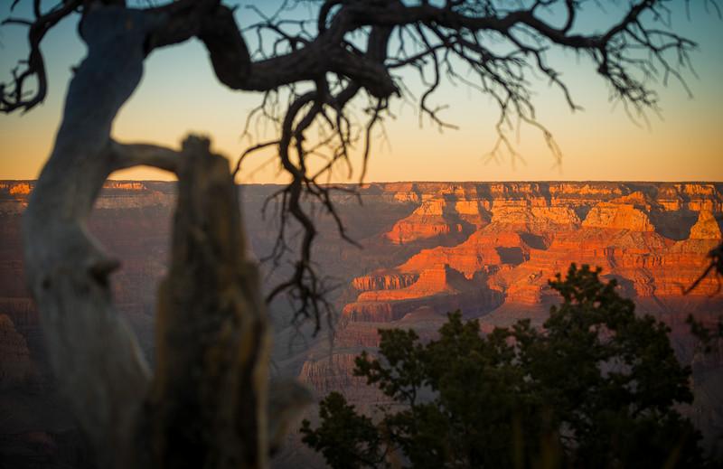 grand-canyon-through-tree.jpg