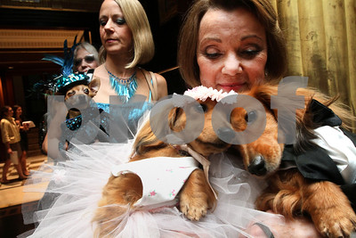 expect-tiny-tuxes-but-no-real-puppy-love-at-doggy-weddings