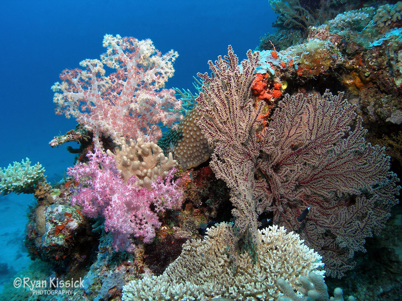More of Fiji's beautiful soft coral