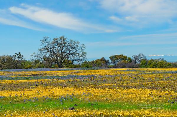 Table Mountain Wild Flowers
