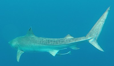 111919 6000 Sharks