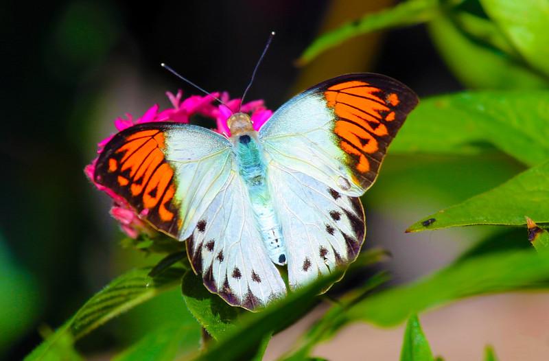 ... bold orange, white and light blue ...