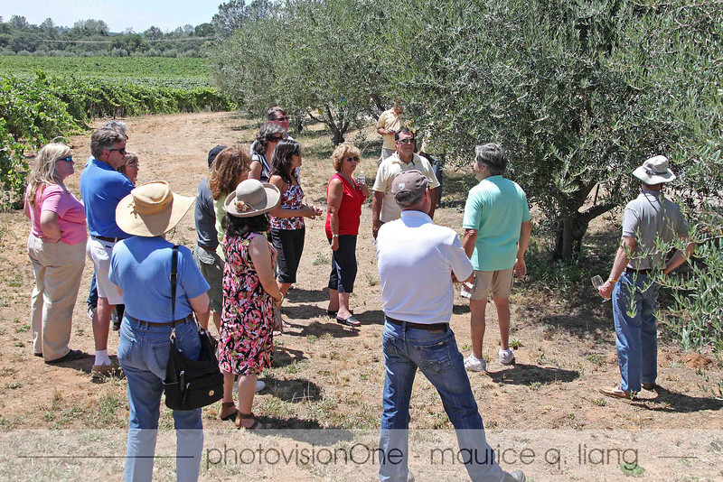 John takes us on a tour of the vineyards and the olive grove.