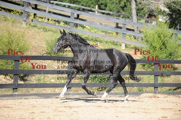 EM Adancer and 2011 foal Rohannah RF