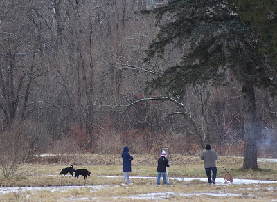 Walking dogs at the Spruces - 122418