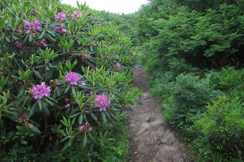 Mountains-to-Sea Trail (5,450')