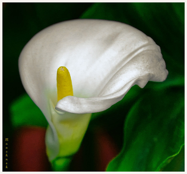 The Cala Lilly