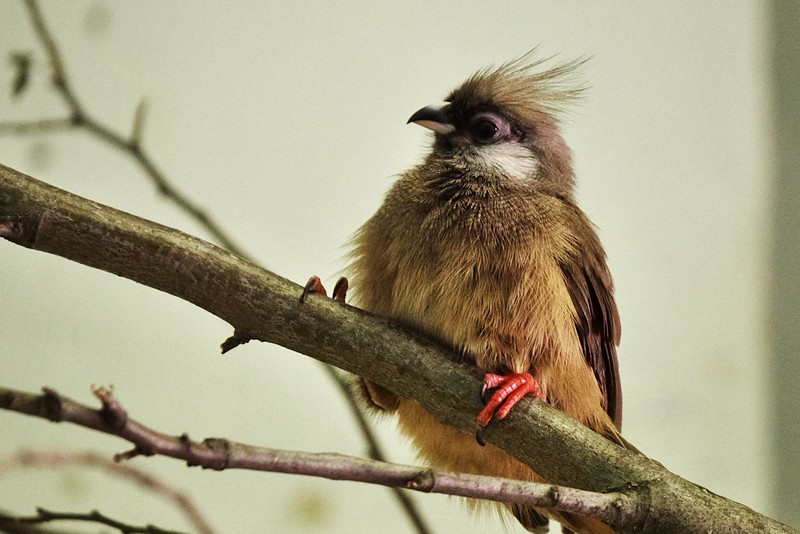 Tohohle ptáka se mi bohužel nepovedlo na stránkách zoo dohledat...