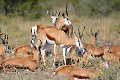 Botswana: Central Kalahari Game Reserve: Day 2: 2019