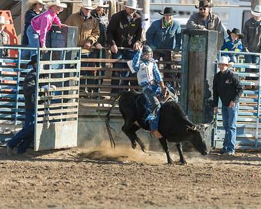 Broncs, Bulls, Steers