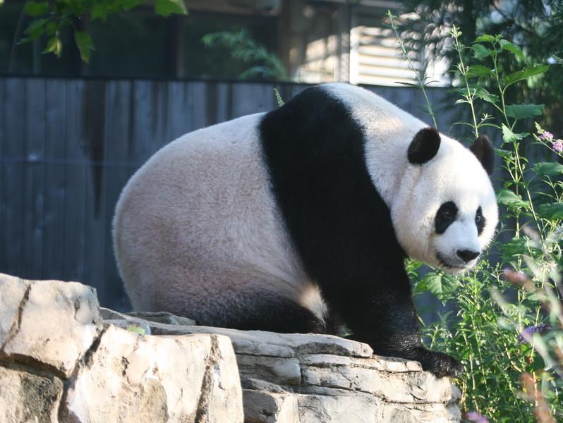 Panda072807_011.jpg