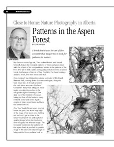 Patterns in the Aspen Forest