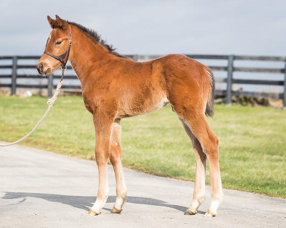 Lea Foals '17