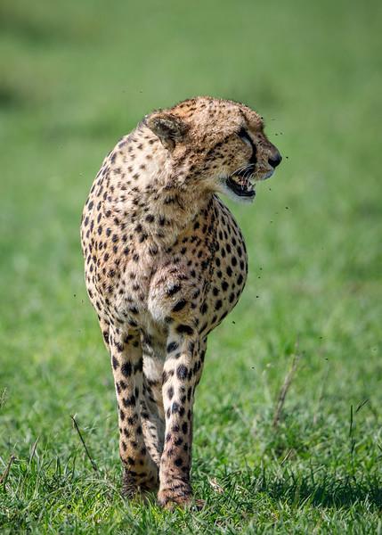 Kenya_PSokol_0619-1713.jpg