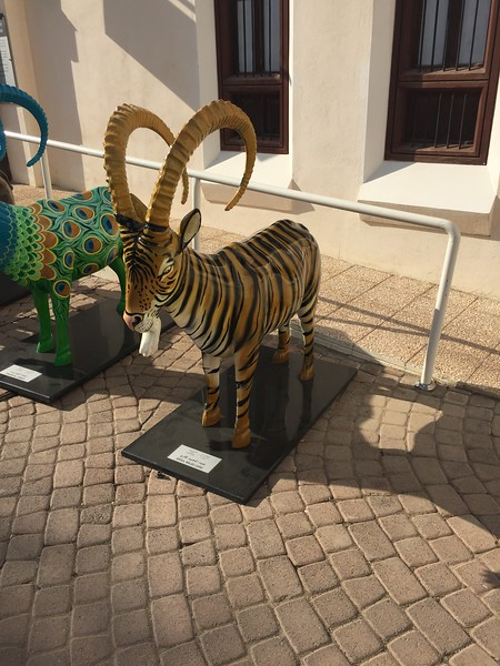Princeton colors in Muscat, Oman - Bridget St. Clair