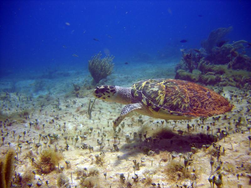 110805, Cancun Dive (35).jpg