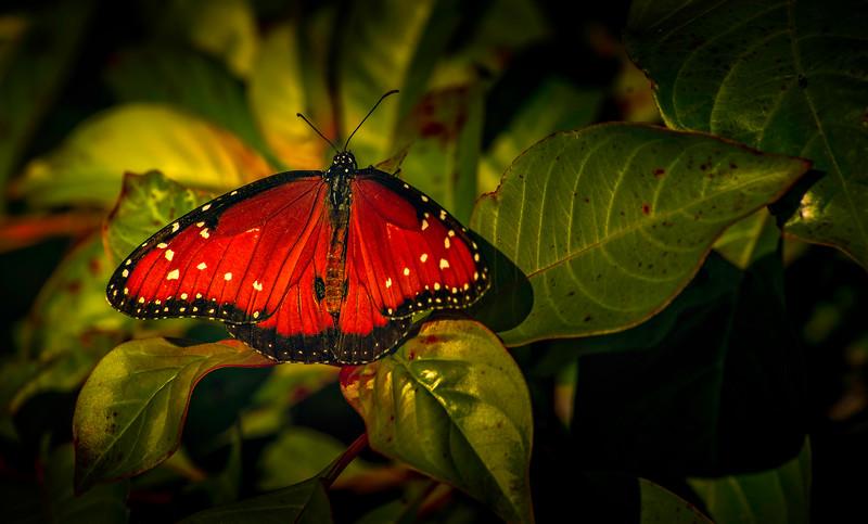 Butterfly-149.jpg