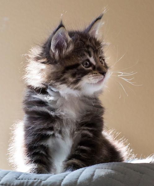 Kittens226.jpg