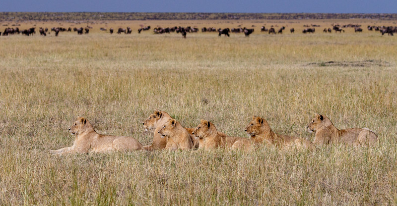 Kenya 2015-05919.jpg