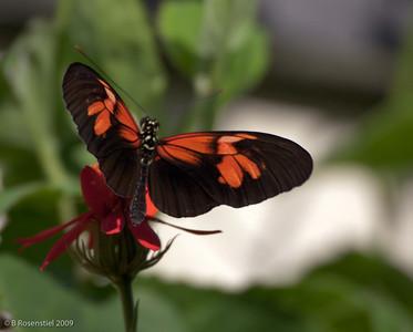 Florida Butterfly Garden