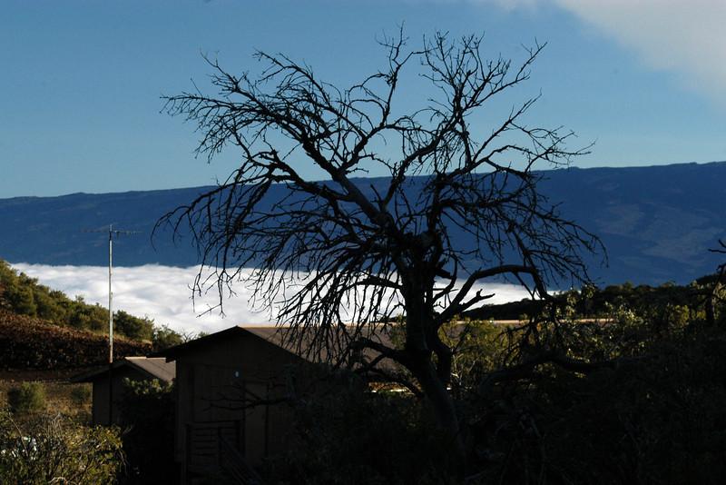 304- 20080414- Hawaii 19- Mauna Kea DSC_3313.jpg