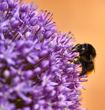 Bees, Butterflies and Insects