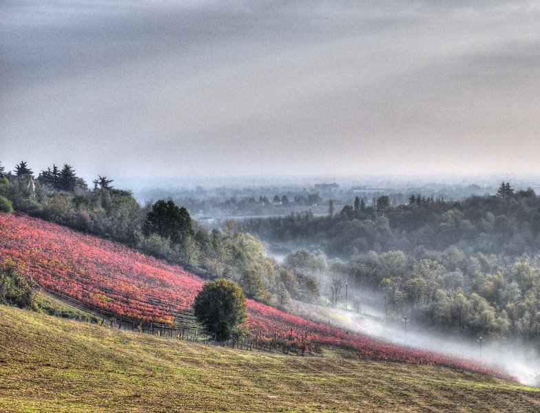 Autumn - Madonna dell'Uliveto, Montericco di Albinea, Reggio Emilia, Italy - November 2008