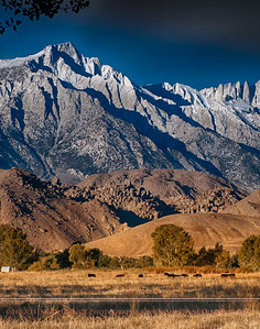 Afternoon glow on a brilliant November day beneath Mt. Whitney.