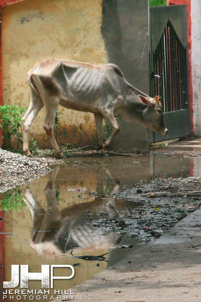 """Skin Tight Reflections"", Rishikesh, Uttaranchal, India, 2007 Print IND3268-050"