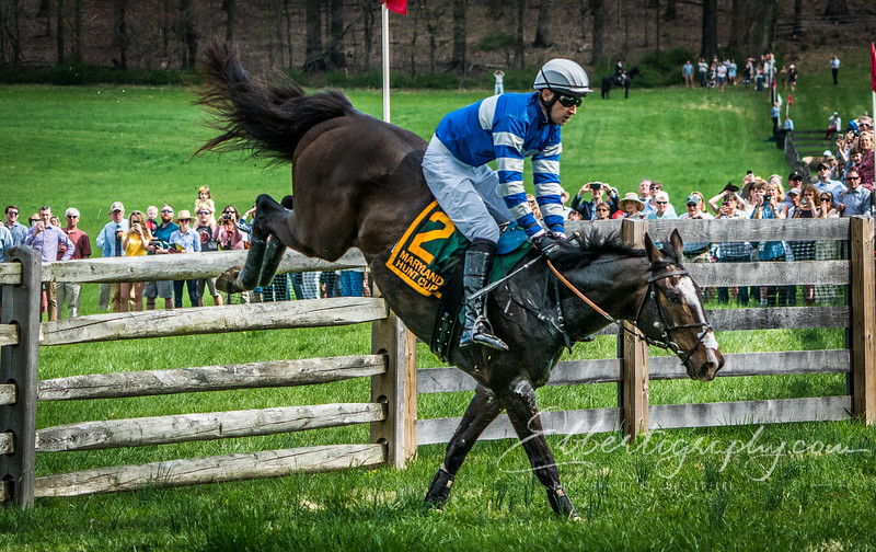Horse Races and Competitions