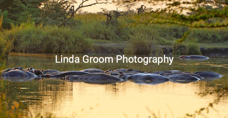 Hippo Pool at Dawn