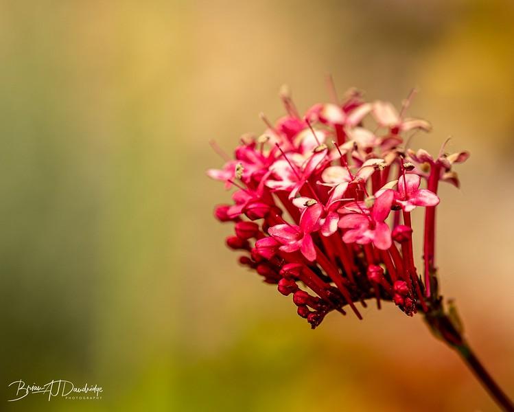 Garden colour-3325.jpg