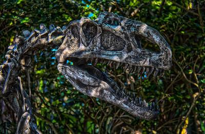 Zoo Miami (Florida)