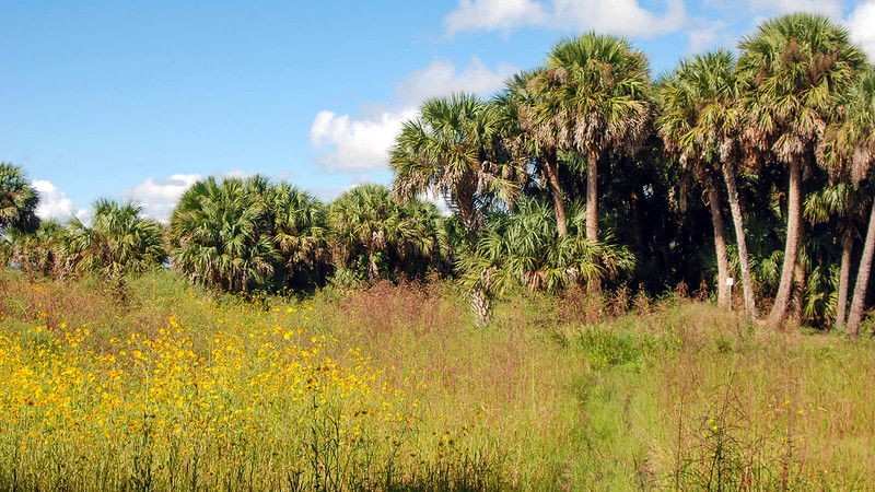 Lake Jesup Wilderness