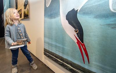 Audubon Animated Press Images
