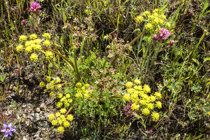 Edgewood_Park_wildflowers-26.jpg