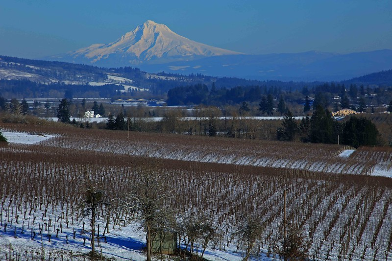 Mt Hood from Dundee Hills