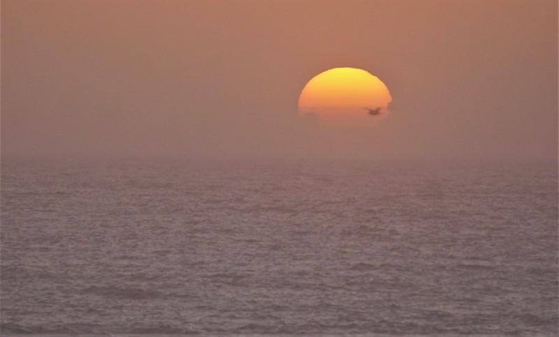Bird over Sun.JPG