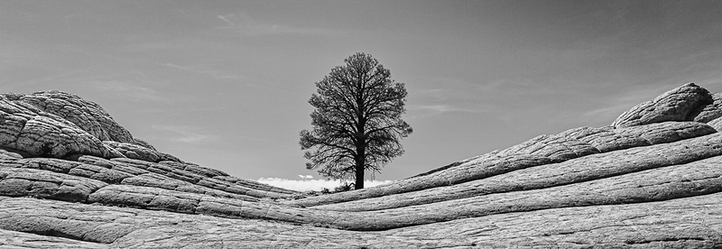 Lone Tree-White Pocket_John Hoffman.jpg
