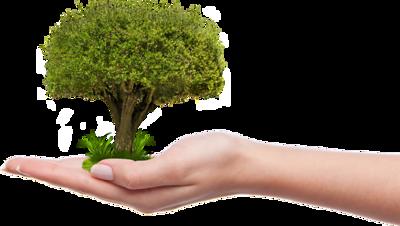 Binance Charity Tree Millions