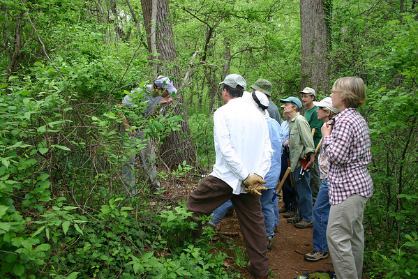 Invasive Plant Removal Day 2-May-2009