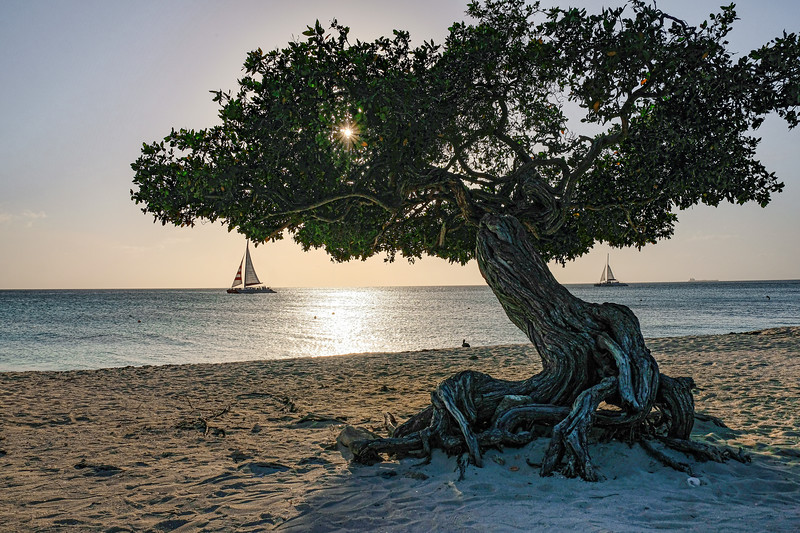 Aruba Tree and Boats 2.jpg