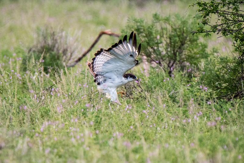 Samburu (55 of 70).jpg