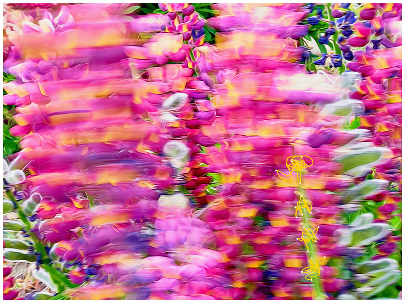 _1310088_Art_Lupin_Topaz.jpg