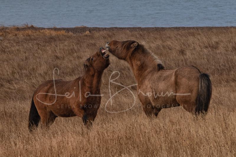 Horses' greeting-1.jpg