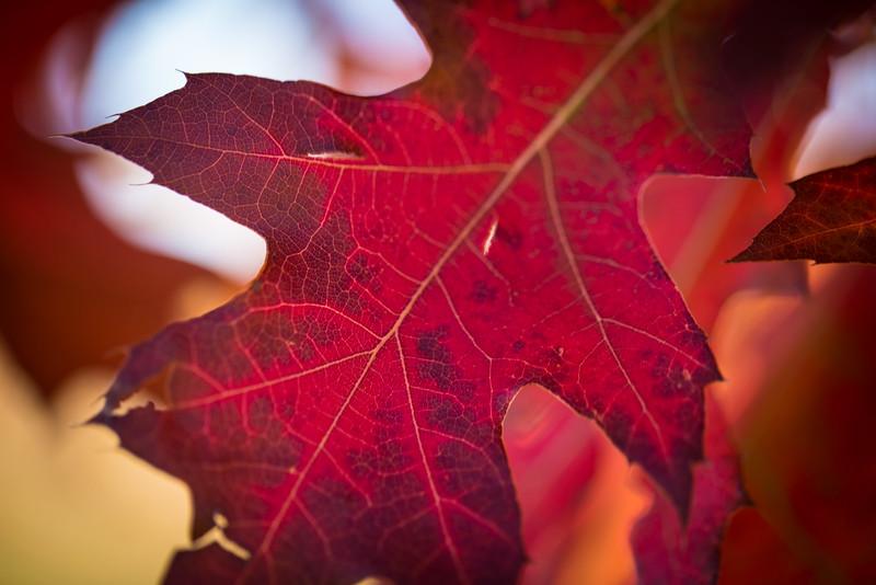 20151024-Fall Colors-75.jpg